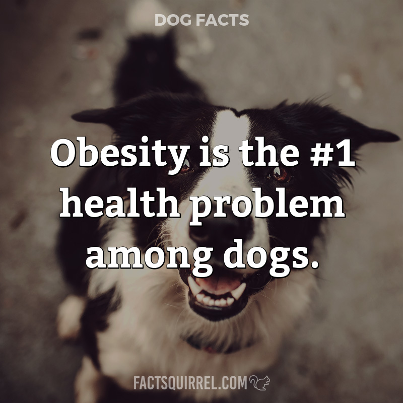 Obesity is the #1 health problem among dogs