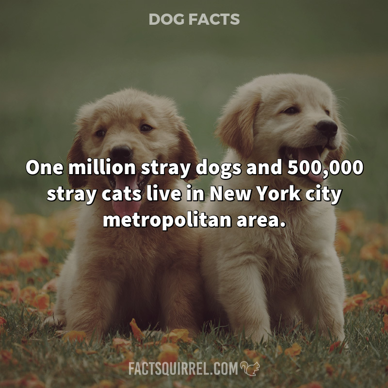 One million stray dogs and 500,000 stray cats live in New York city