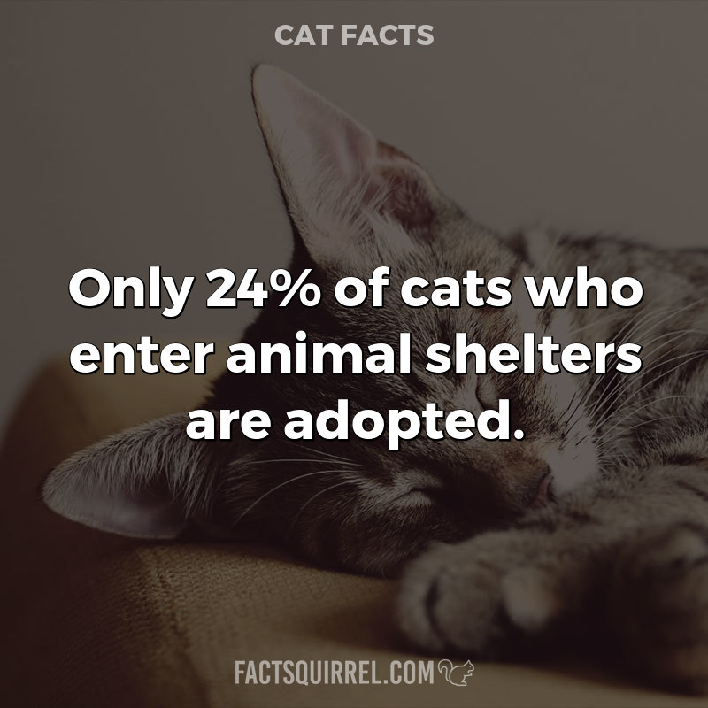 Only 24% of cats who enter animal shelters are adopted