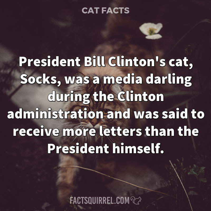 President Bill Clinton's cat, Socks, was a media darling during the