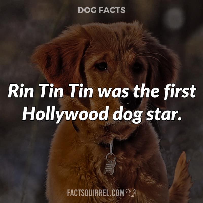 Rin Tin Tin was the first Hollywood dog star
