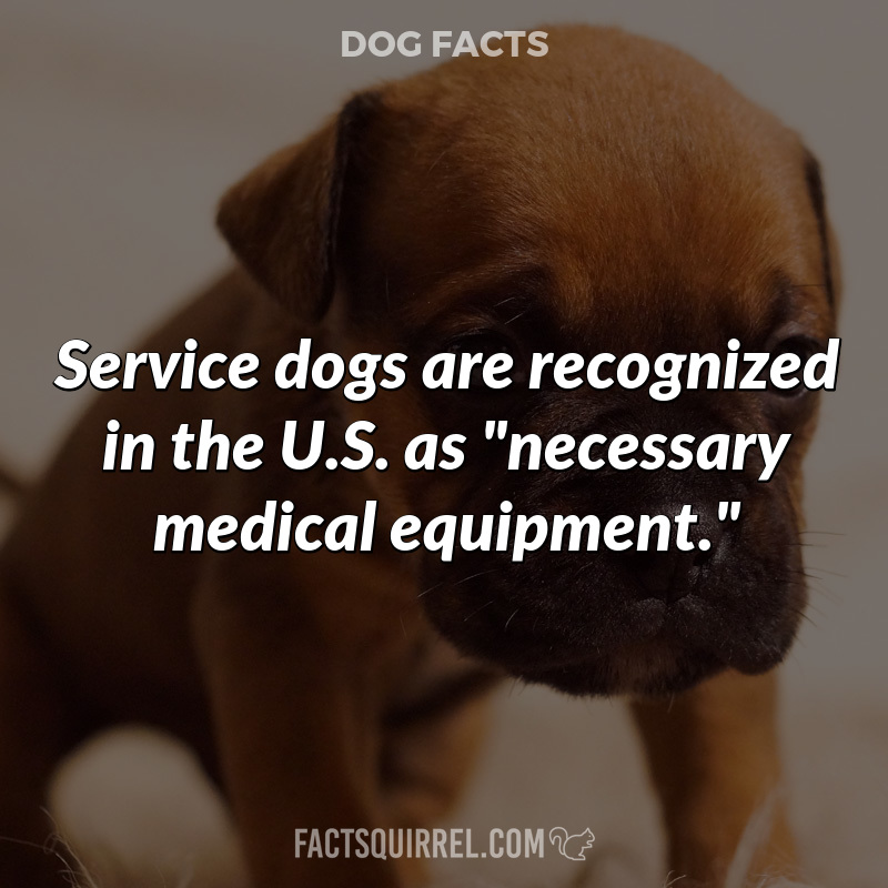 """Service dogs are recognized in the U.S. as """"necessary medical"""