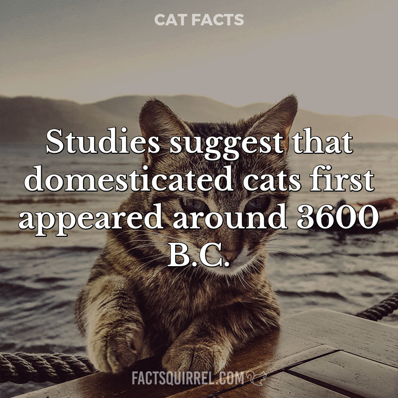 Studies suggest that domesticated cats first appeared around 3600 B.C