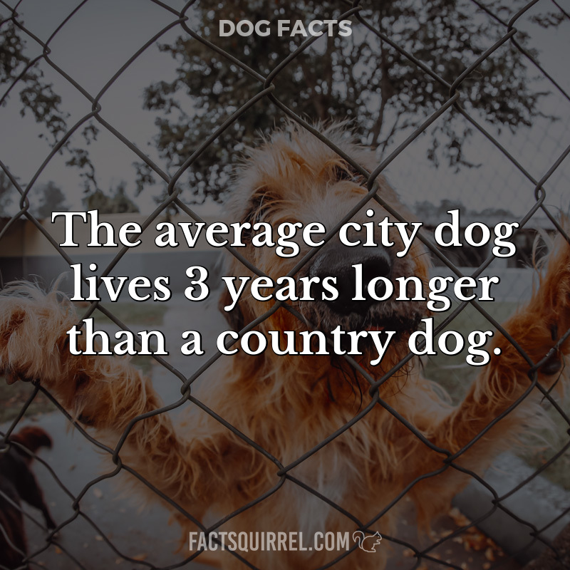 The average city dog lives 3 years longer than a country dog