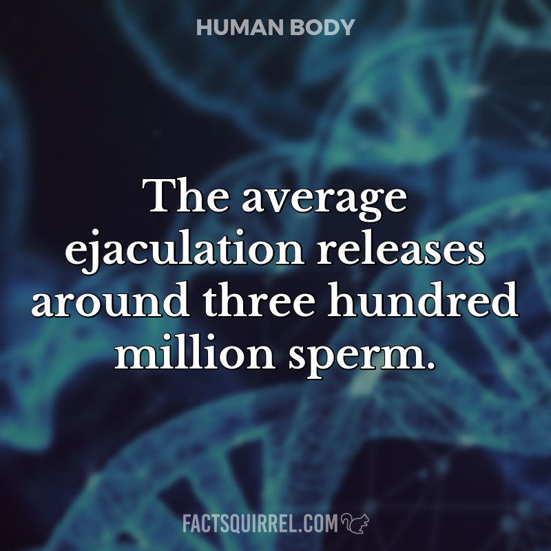 The average ejaculation releases around three hundred million sperm
