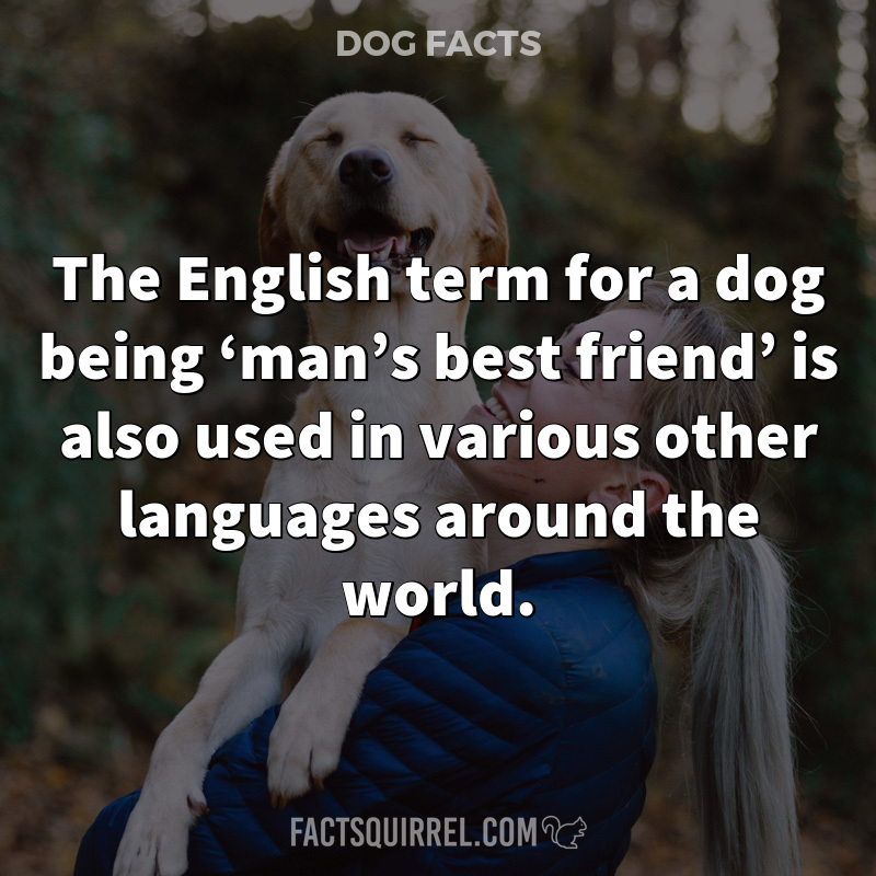 The English term for a dog being 'man's best friend' is also used