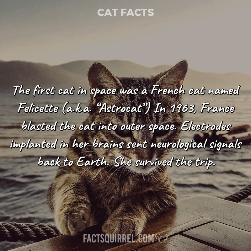 The first cat in space was a French cat named Felicette (a.k.a.