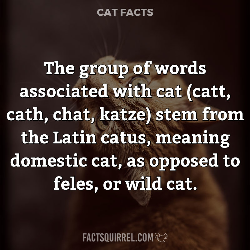 The group of words associated with cat (catt, cath, chat, katze) stem