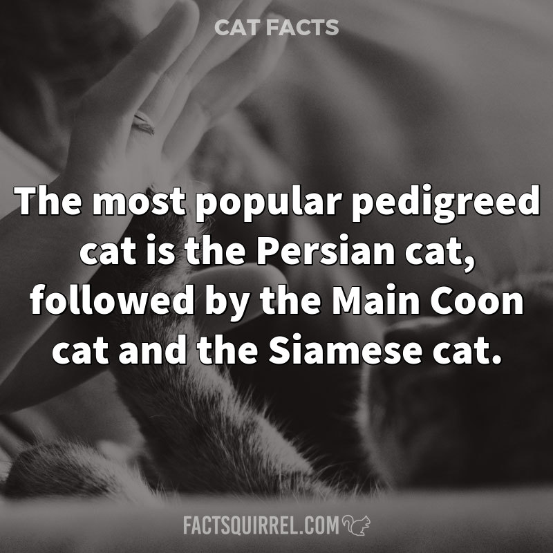 The most popular pedigreed cat is the Persian cat, followed by the Main