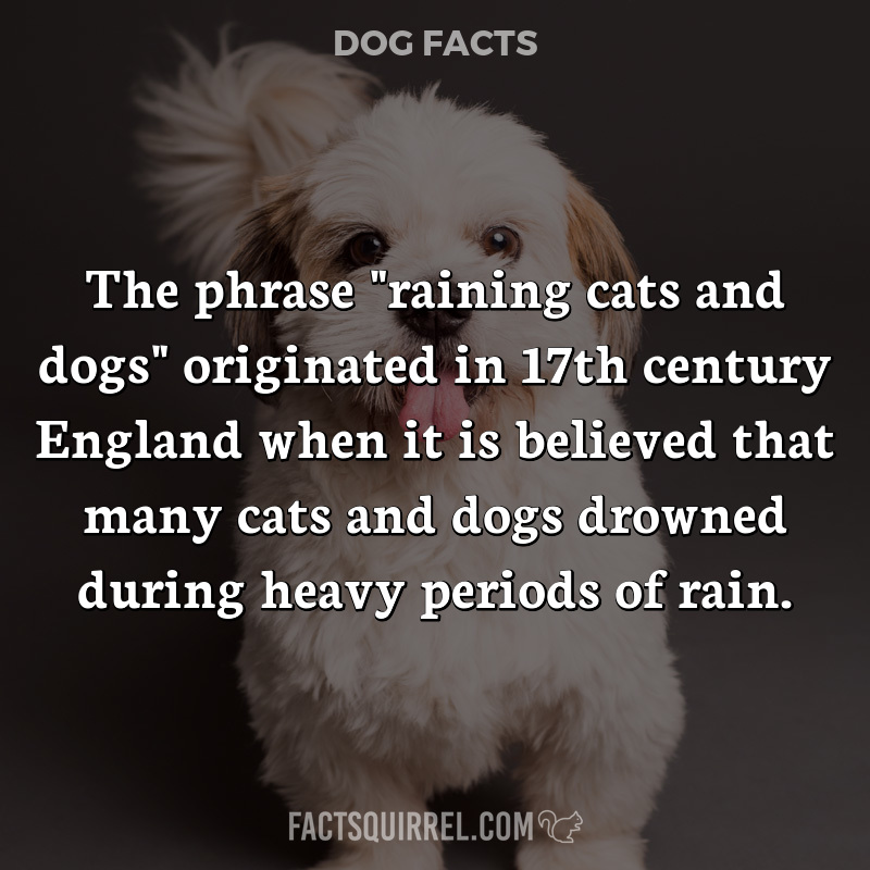 """The phrase """"raining cats and dogs"""" originated in 17th century England"""