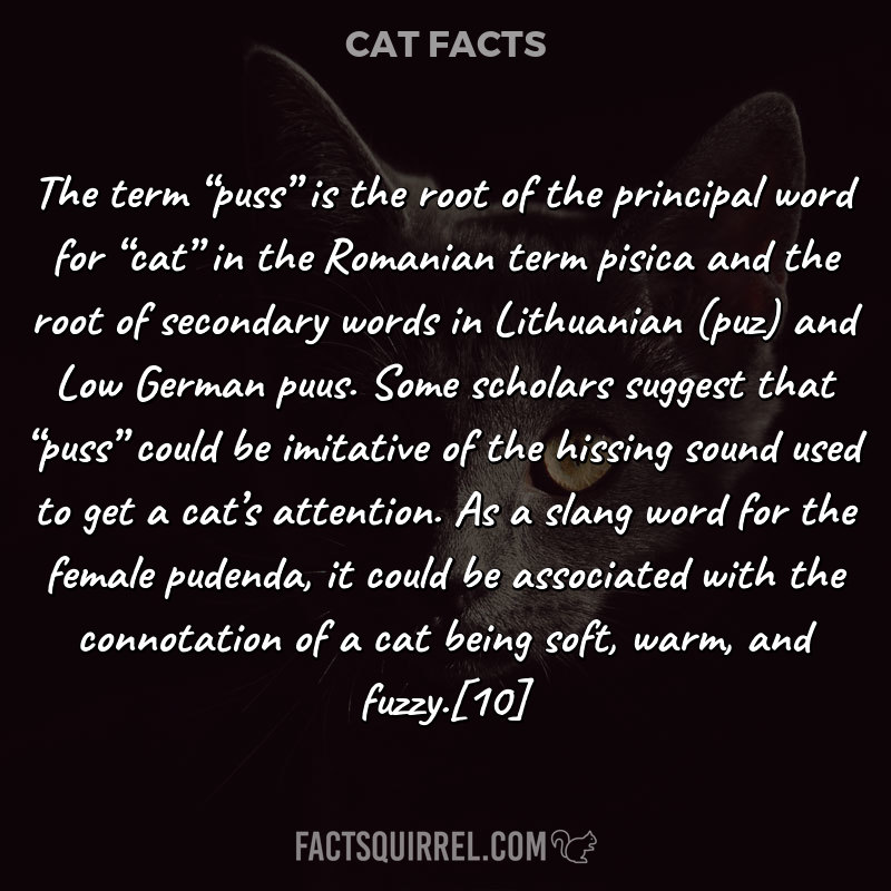 """The term """"puss"""" is the root of the principal word for """"cat"""" in"""