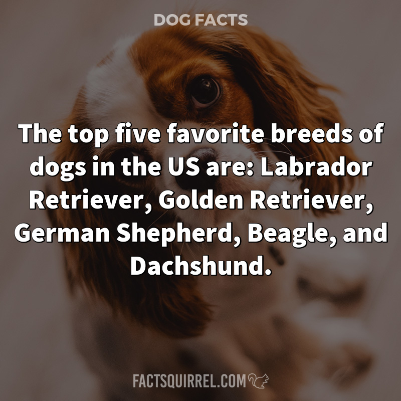 The top five favorite breeds of dogs in the US are: Labrador Retriever,