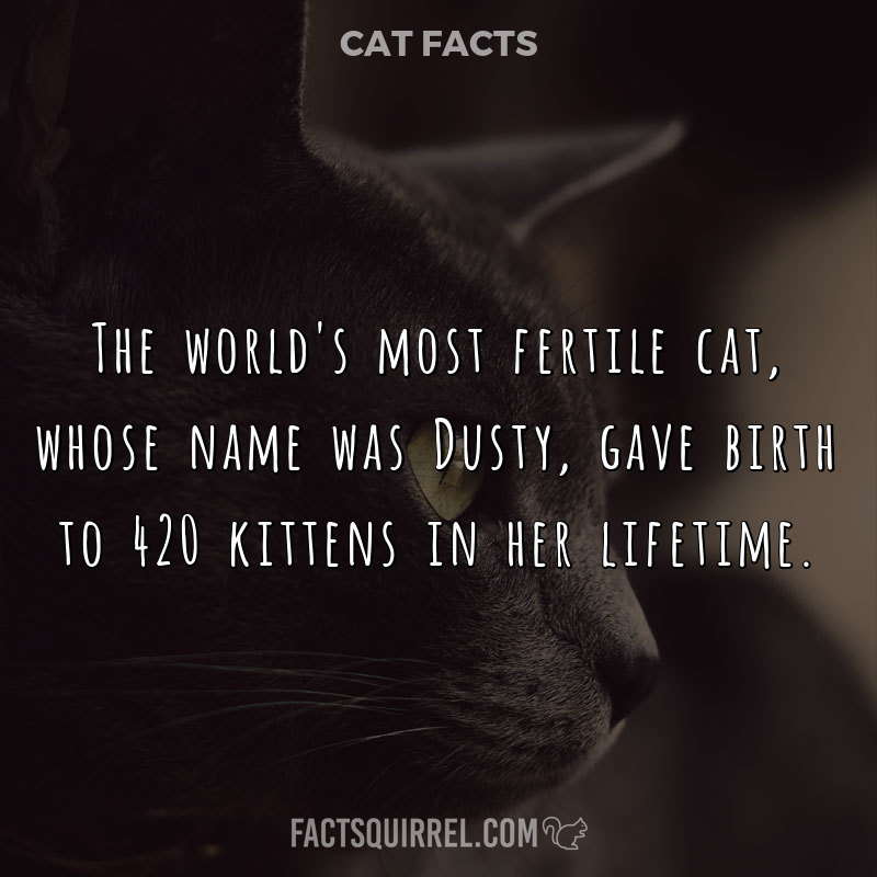 The world's most fertile cat, whose name was Dusty, gave birth to 420