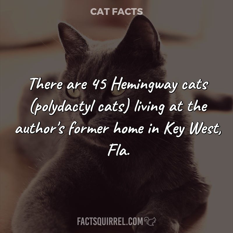 There are 45 Hemingway cats (polydactyl cats) living at the author's