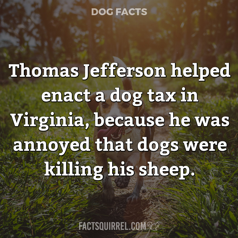Thomas Jefferson helped enact a dog tax in Virginia, because he was