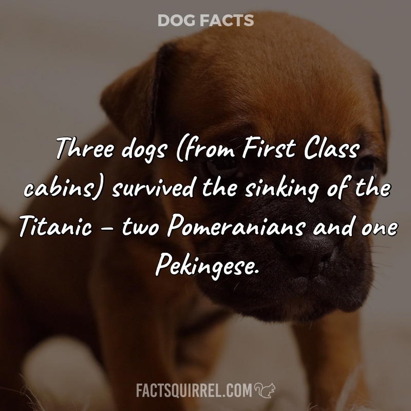 Three dogs (from First Class cabins) survived the sinking of the Titanic