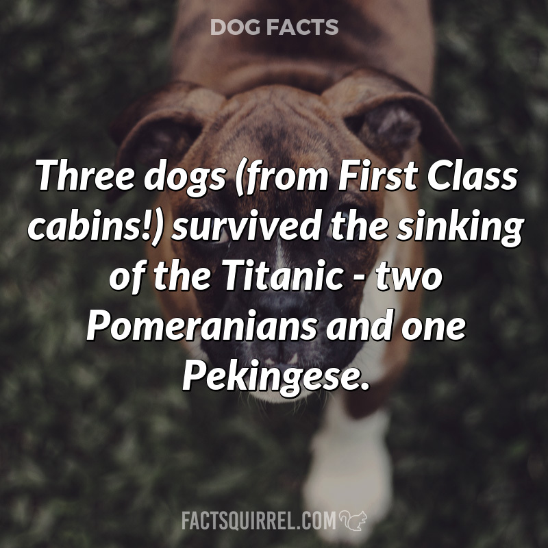 Three dogs (from First Class cabins!) survived the sinking of the