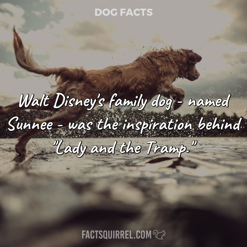 Walt Disney's family dog – named Sunnee – was the inspiration behind
