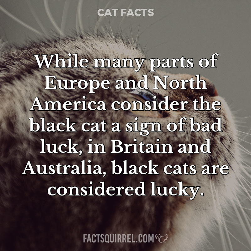 While many parts of Europe and North America consider the black cat a