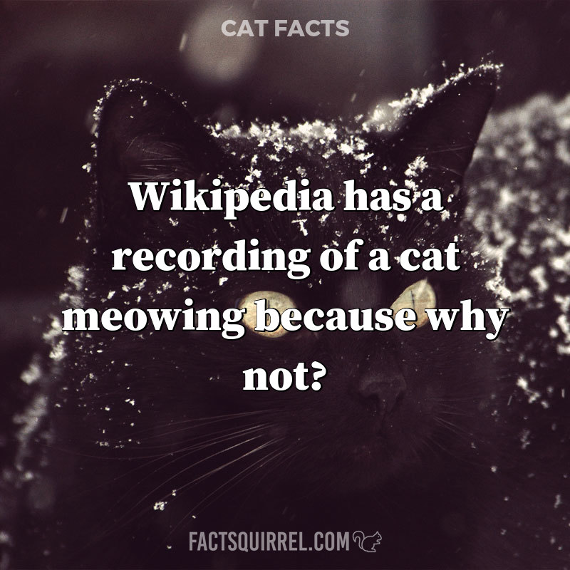 Wikipedia has a recording of a cat meowing because why not?