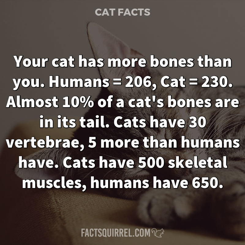 Your cat has more bones than you. Humans = 206, Cat = 230. Almost 10% of